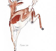 Springbok Pronking 2 by Maree Clarkson