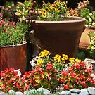 A Potted Garden by heatherfriedman
