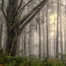 Mist - Laurel Hill NSW Australia - The HDR Experience by Philip Johnson