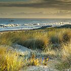 Marram Grass by fotosic