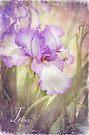 Iris by KBritt