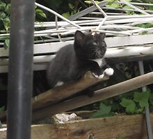 Kitten II -(090613)- Digital photo/Fujifilm FinePix AX350 by paulramnora