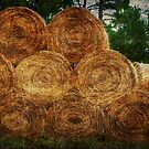 Stacked Hay by Ginger  Barritt