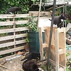 Cat/Kittens -(090613)- Digital photo/Fujifilm FinePix AX350 by paulramnora