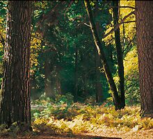Autumn Morning, Yosemite NP by Edward Mendes