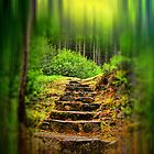A Path to the Forest by David Harnetty