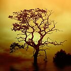 Evening Tree by David Harnetty