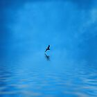 Blue Water Flying by David Harnetty