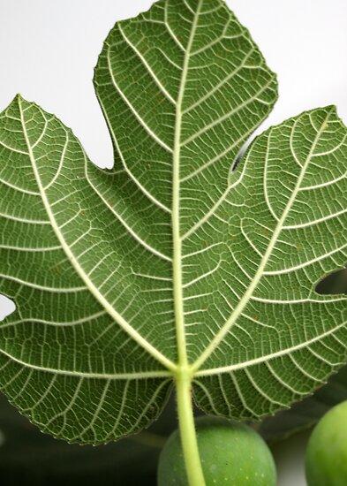 Fig Leave by Henrik Lehnerer