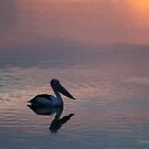 peachy pelican by gaylene