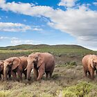 Blue Sky, Clouds and Elephants by Fiona Ayerst