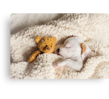 Daisy & Patches Canvas Print