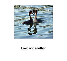 Love One Another - Grebes Photographic Print