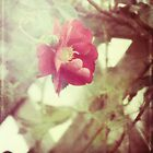 grandma's roses by Kelly Letky