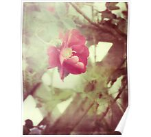 grandma's roses Poster