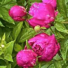 A Rosy Bunch of Peonies! by Lotus0104