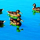 Ducks by joshbshp