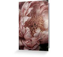 Pink Piony Greeting Card