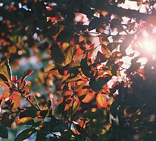 Leaves and Sun by Jenna Boettger Boring