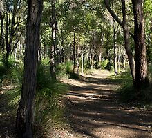 Bush Walking  by RebeccaCates