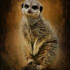 Meerkat sentry by Mark Bunning