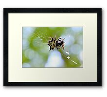 Jewelled Spider At Lunch Framed Print