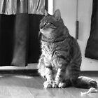 Kitty Q by BlackTopaz