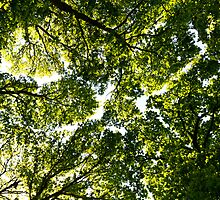 Tree Canopy by DavidHornchurch