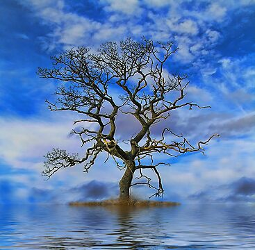 Tree On An Island by David Harnetty