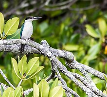 Forest Kingfisher in the Mangroves by Richard Heath