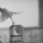 Motion. by Lindsay Osborne