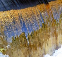 Gold Rush... by LindaR