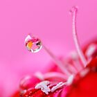 Pretty with the Pink #2 by Prasad
