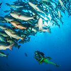 Diver below Boha Snappers by Fiona Ayerst