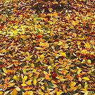 Fallen Leaves 13/06/13 by pennyswork