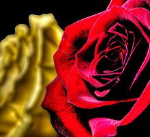 HDR - High Contrast Roses by Doug Greenwald