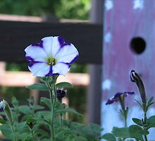 Small petunia and the Birdhouse by PicsbyJody