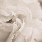 Sepia Petals. by Lindsay Osborne