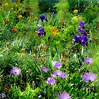 Flowers in a Meadow. (Not what they seem). by ronsphotos