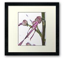 Adriatic Lizard Orchid Framed Print