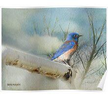 Little Blue Bird Poster