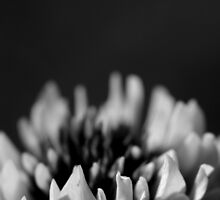 White Clover by JeannieBlue
