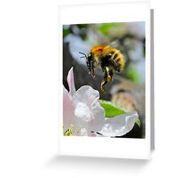 Pollinating Bumblebee Greeting Card