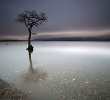 Loch Lomond Tree Sunset by Maria Gaellman