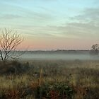 Foggy Texas Morn by Paul Sturdivant