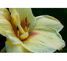 Evening With Lily Photographic Print