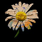Painted Daisy by Ian Jeffrey