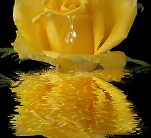 Yellow rose water reflection blank note card - any occasion card by Moonlake