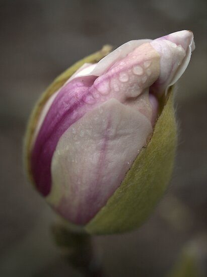 First Bud by Ben Loveday