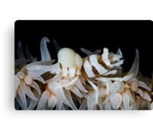 Zanzibar Shrimp & Isopod Canvas Print